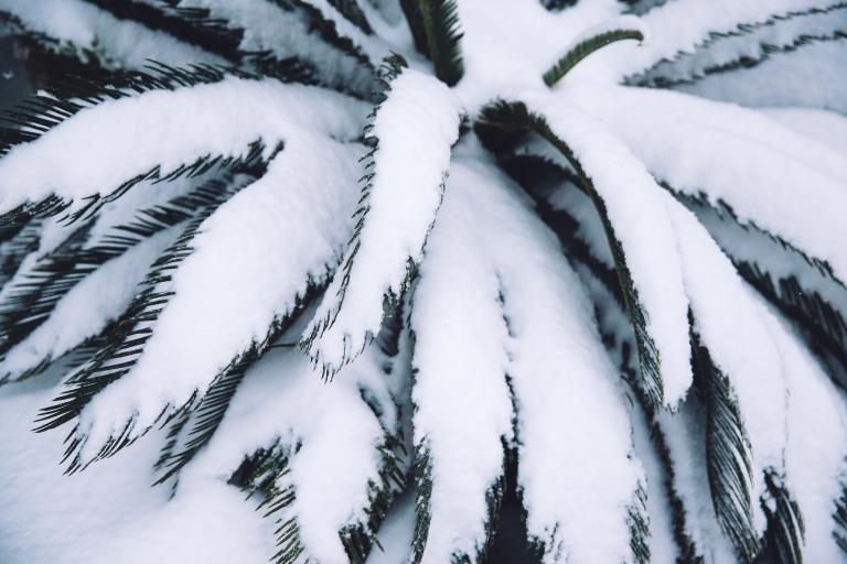 snowmygosh059